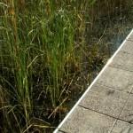 Uimaramppi ylittää ruohot ja liejun